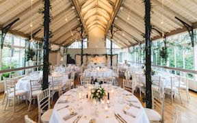 White Festoon, for a softer look - Photo Credit: Sean Elliot