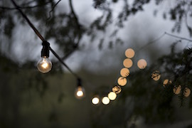 Festoon between Trees